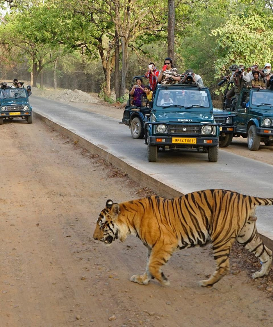 indian-panorama-tour-ranthambhore-national-park